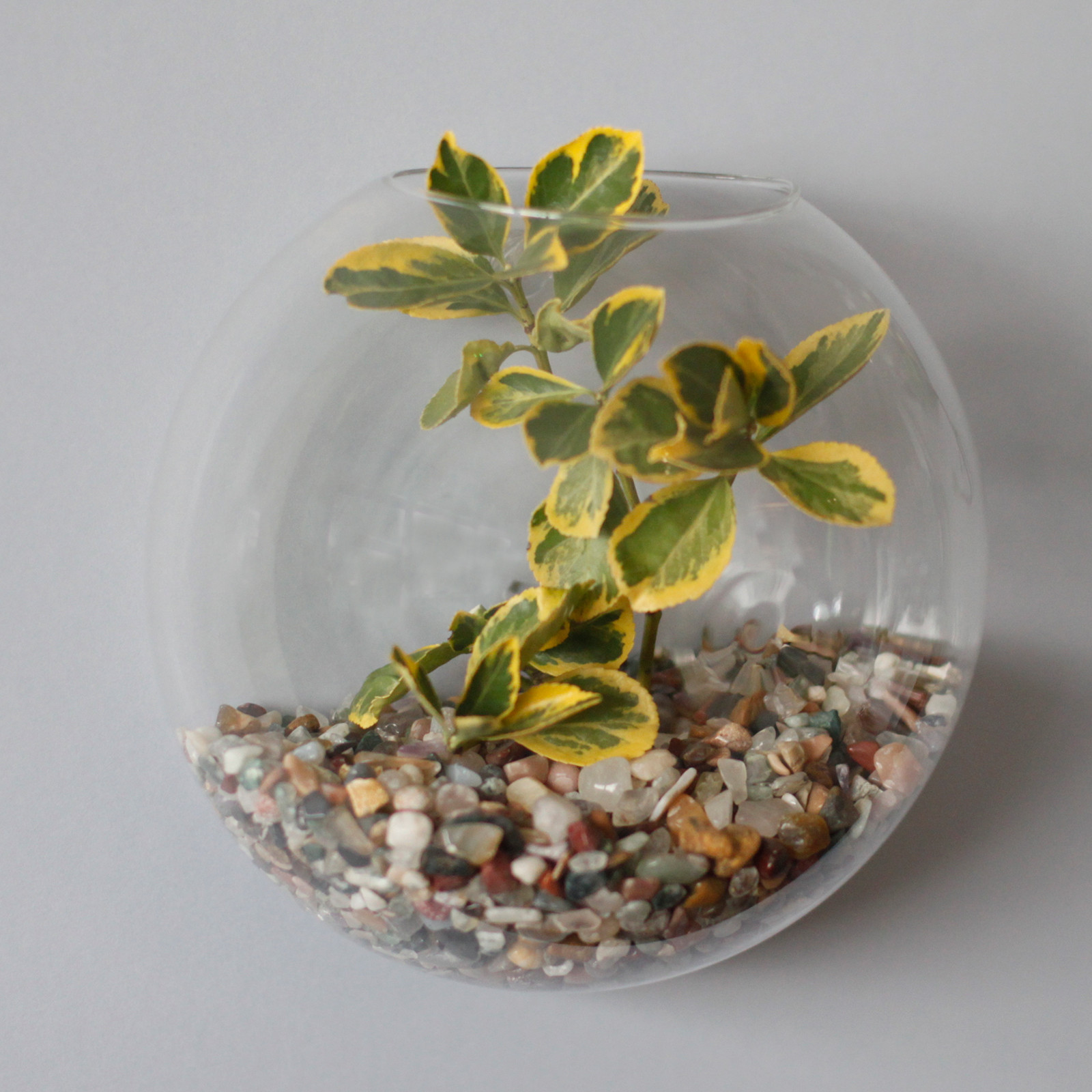 All Glass Terrarium Large Hanging Wall Bowl