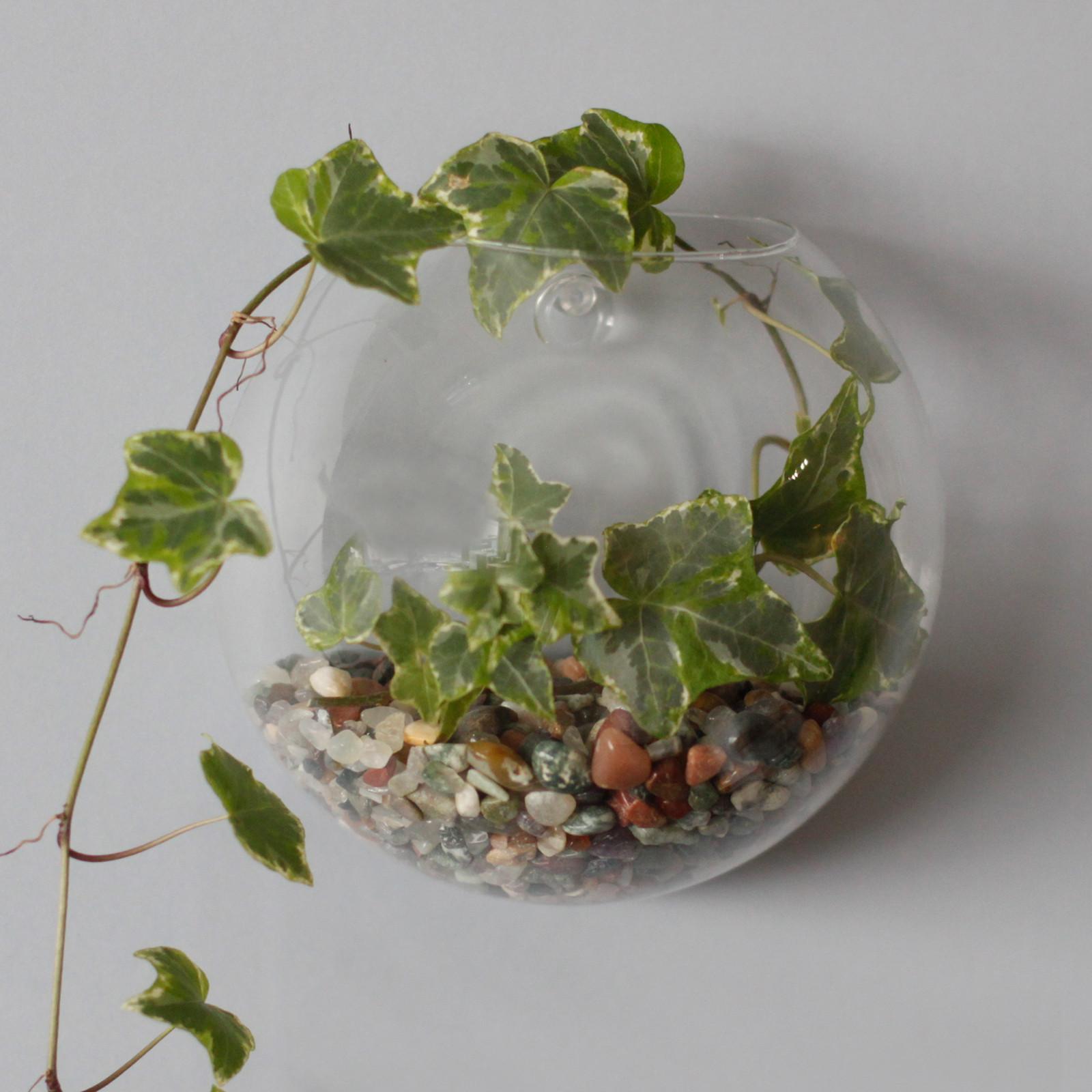 All Glass Terrarium Small Hanging Wall Bowl