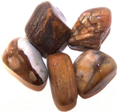 L Tumble Stones Petrified Wood
